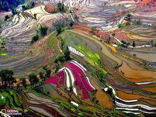 绝美的水稻梯田